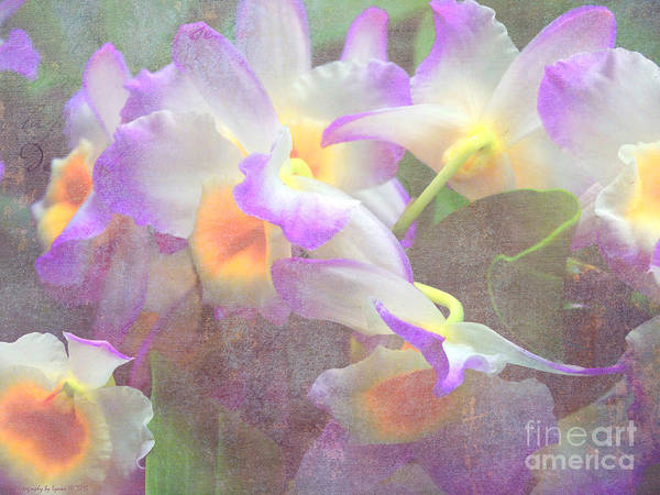 Photograph - Soft Subtle Orchids by Gena Weiser