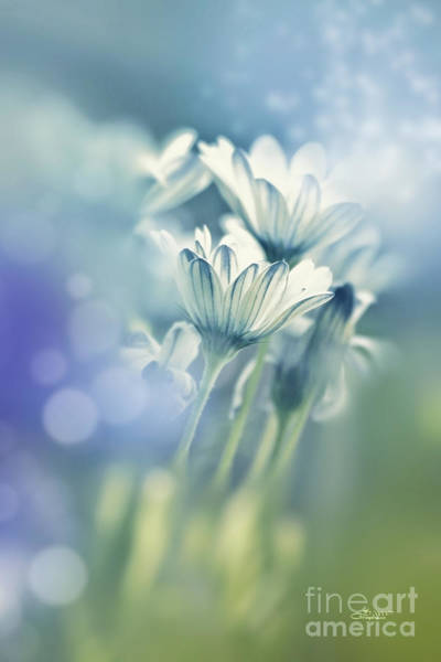 Photograph - Soft Summer Breeze by Jutta Maria Pusl