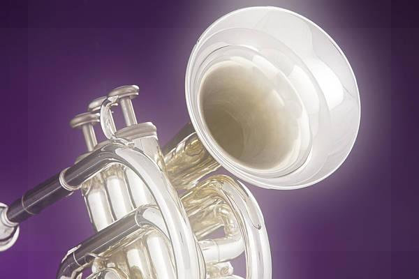 Photograph - Soft Trumpet On Purple by M K Miller