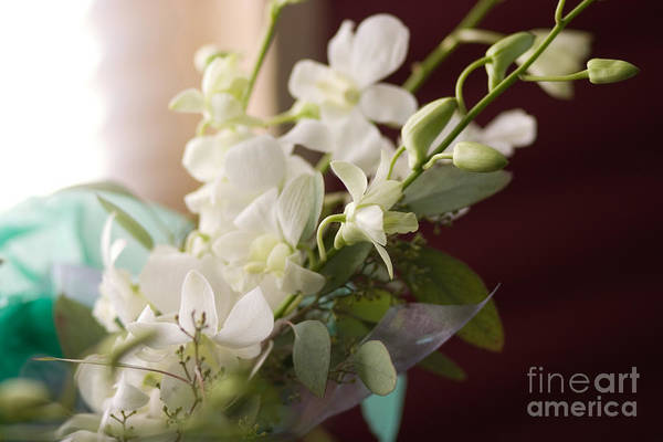 Photograph - Soft White Flowers by Cindy Singleton