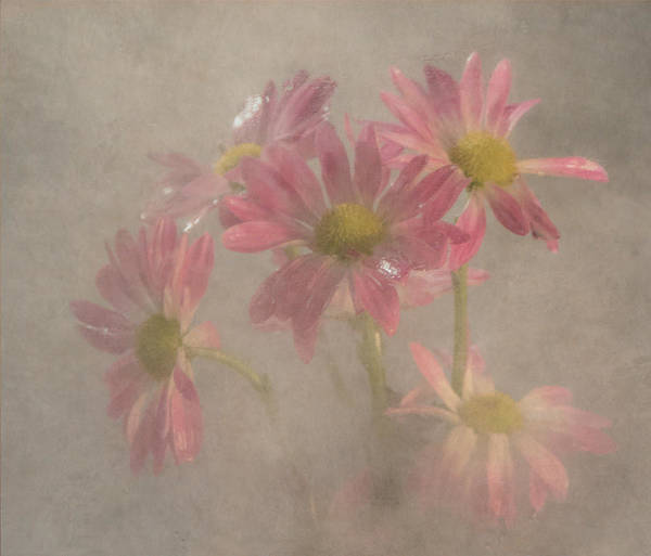 Wall Art - Photograph - Softly by Angie Vogel
