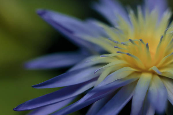 Photograph - Softly Blue by Wes and Dotty Weber