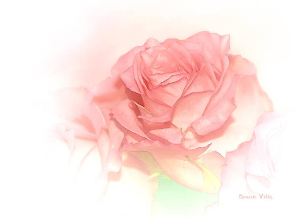Photograph - Softly Pink by Bonnie Willis