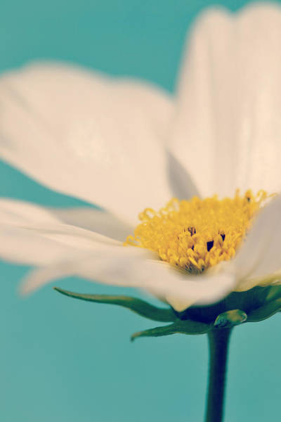 Photograph - Softly Spoken by Melanie Moraga