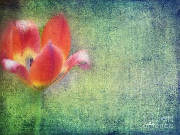 Photograph - Softly Whispering by Jutta Maria Pusl