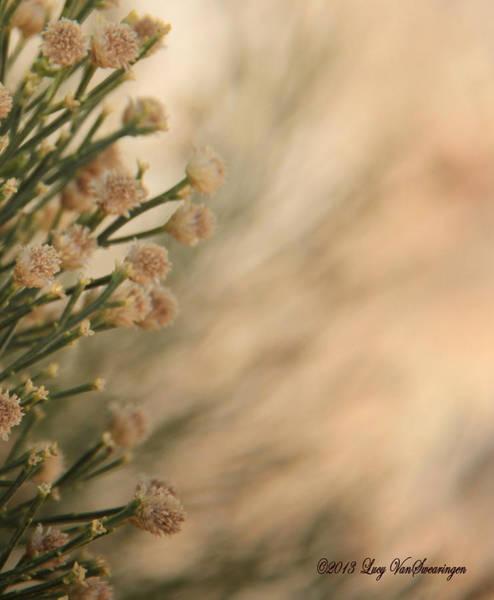 Softness In The Desert Art Print