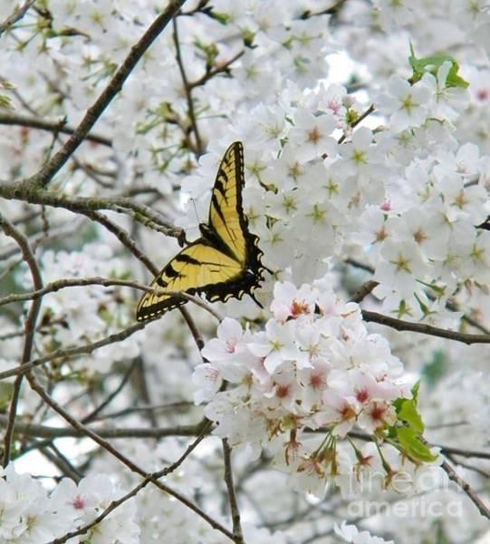 Softness Of Spring Art Print