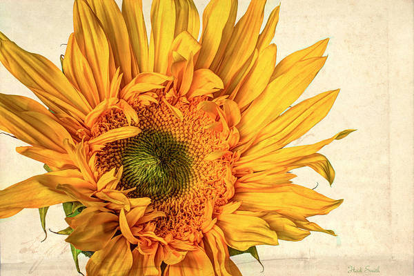 Sunflower Seeds Photograph - Sol by Heidi Smith