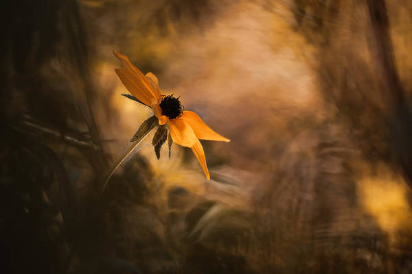 Bokeh Wall Art - Photograph - Solaris by Fabien Bravin