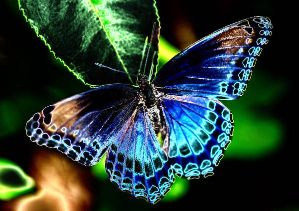 Solarized Photograph - Solarized Butterfly by Heather Fox
