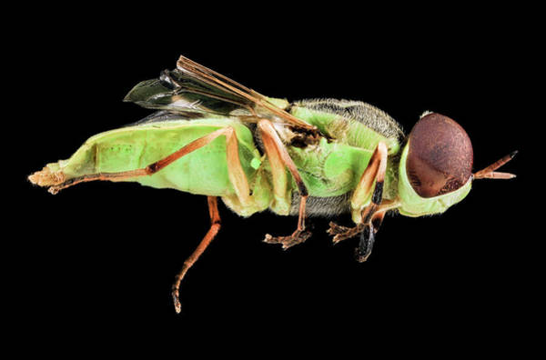 Image Stacking Photograph - Soldier Fly by Us Geological Survey
