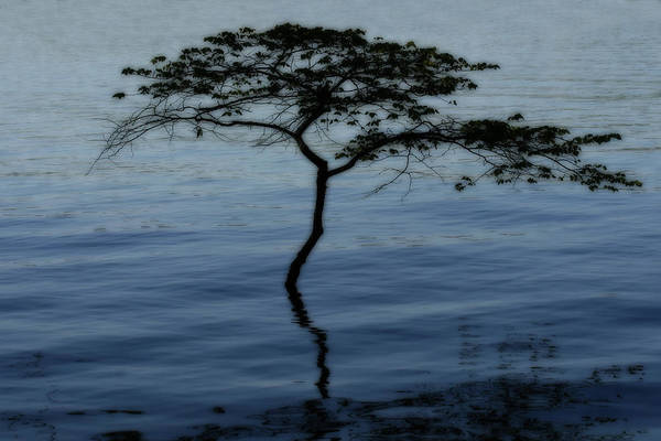 Photograph - Solitaire Tree by CE Haynes