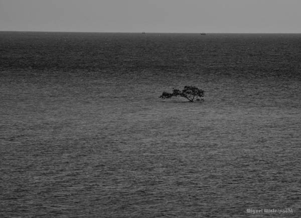 Photograph - Solitary Waters by Miguel Winterpacht
