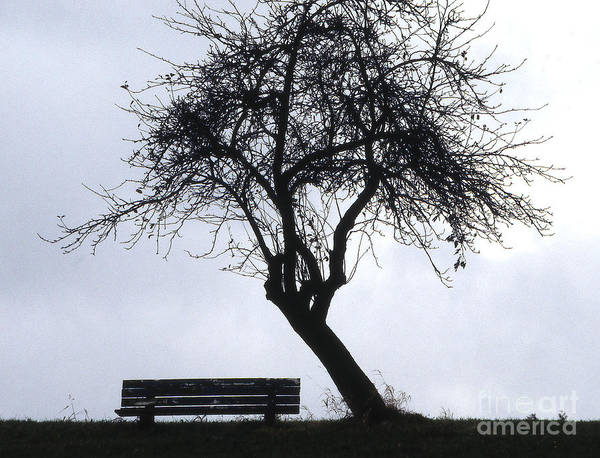 Photograph - Solitary  by Heiko Koehrer-Wagner