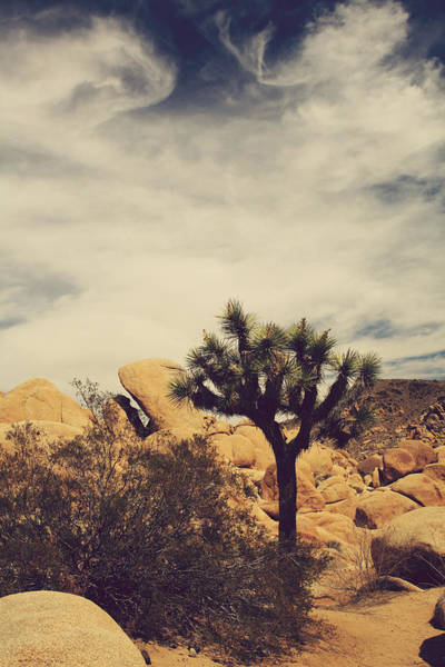 Joshua Tree National Park Wall Art - Photograph - Solitary Man by Laurie Search