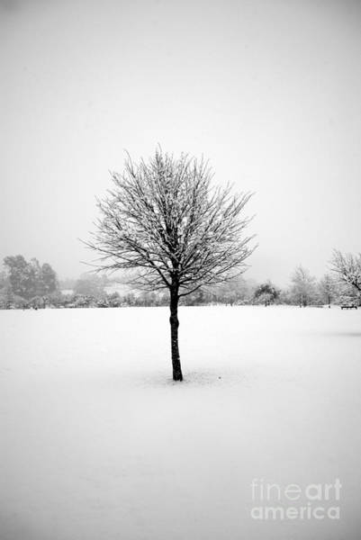 Photograph - Solitary Snow Tree - In Black And White by Rachael Shaw