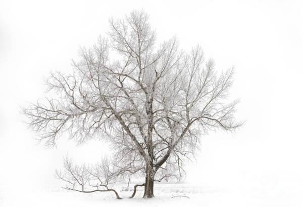 Solitary Photograph - Solitary Tree by Dan Jurak