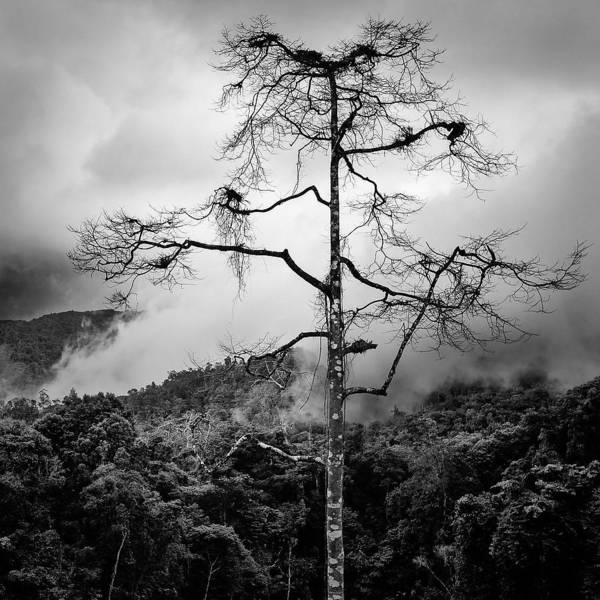 Solitary Photograph - Solitary Tree by Dave Bowman