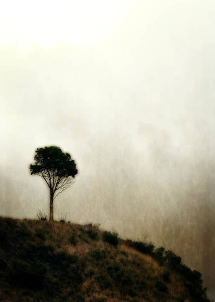 Photograph - Solitary Tree by Michelle Calkins