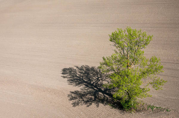Photograph - Solitary Tree. Richmond Ontario Dairy Farm. by Rob Huntley