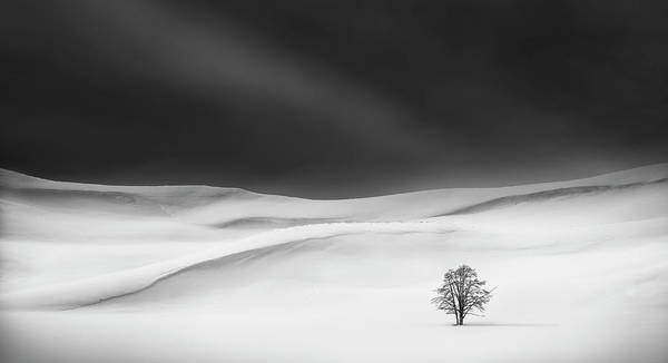 Wall Art - Photograph - Solitude by Huibo Hou