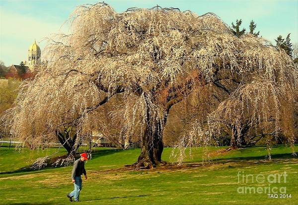 Muhlenberg Photograph - Solitude In Bloom by Tami Quigley