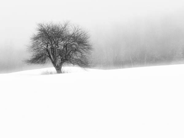 Photograph - Solitude by John Vose
