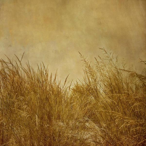 Photograph - Solitude by Kim Hojnacki