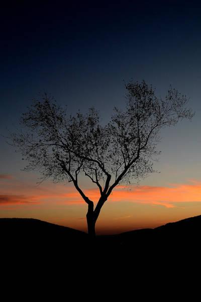 Photograph - Solitude by Melanie Moraga