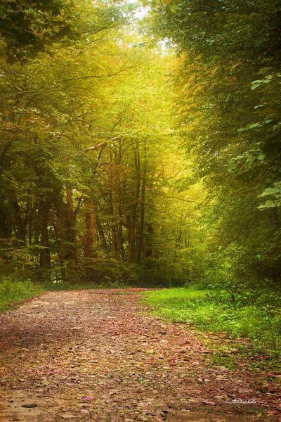Photograph - Solitude Path by Christina Rollo