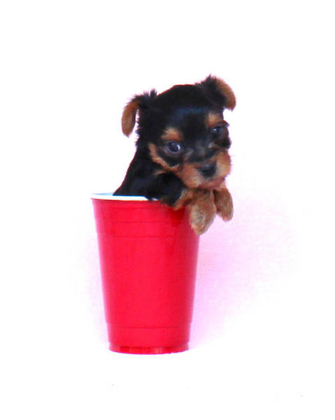 Photograph - Solo Cup Pup  by Lorna R Mills DBA  Lorna Rogers Photography