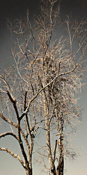 Photograph - Solo Scrubbed Oak by Steve Sperry
