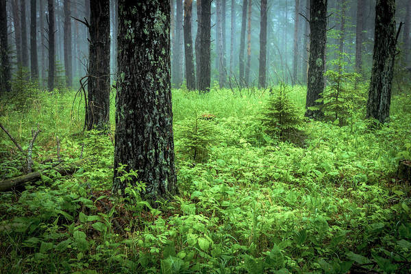 Wall Art - Photograph - Whispering Woods by Mary Amerman