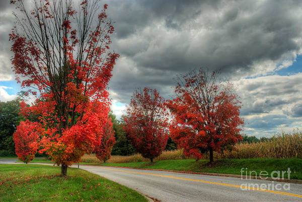 Photograph - Some Fall Colors by Mark Dodd