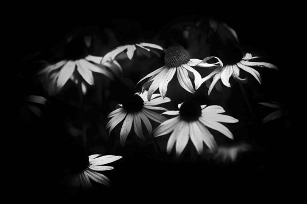 Photograph - Some Kind Of Flower by Patrick M Lynch