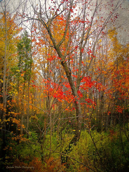 Photograph - Some Reds Left by Lucinda Walter