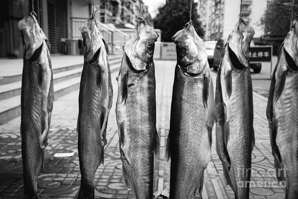 Wall Art - Photograph - Something Fishy 2 by Dean Harte