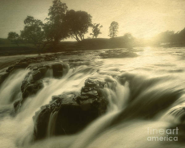 Photograph - Something In The Water by Edmund Nagele
