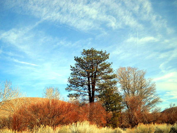 Bishop Hill Photograph - Something Simple by Marilyn Diaz
