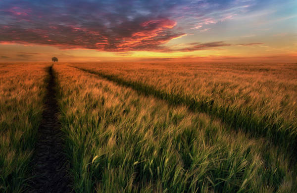 Wheat Wall Art - Photograph - Somewhere At Sunset by Piotr Krol (bax)