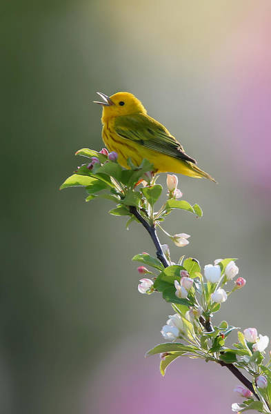 Wall Art - Photograph - Song Of Spring by Rob Blair