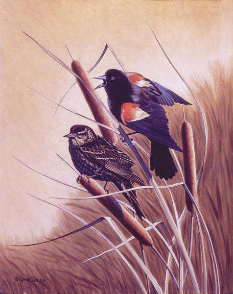 Red-winged Blackbird Wall Art - Painting - Song Of The Marsh by Richard De Wolfe