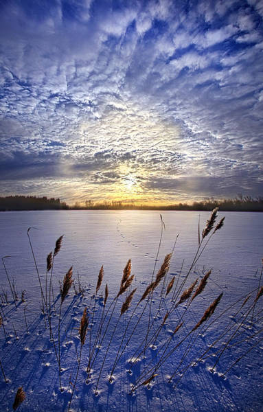 Photograph - Songs Of Surrender by Phil Koch