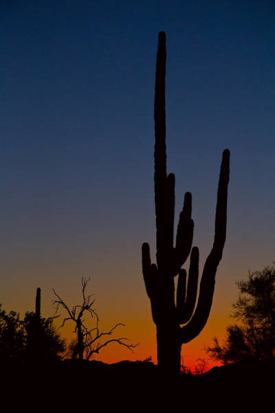 Photograph - Sonoran Desert Sunrise by James BO Insogna