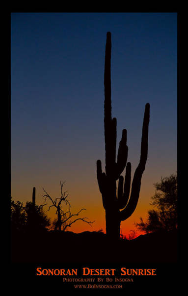 Photograph - Sonoran Desert Sunrise Poster Print by James BO Insogna