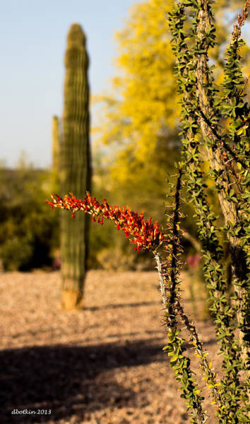 Wall Art - Photograph - Sonoran Spring by Dick Botkin