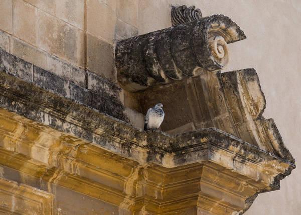 Photograph - Sophisticated Baroque Bird Perch by Georgia Mizuleva