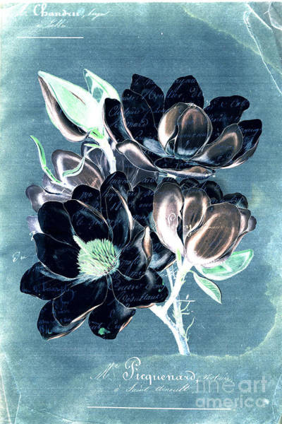 Aqua Blue Digital Art - Sophisticated - Floral Ccc by Variance Collections