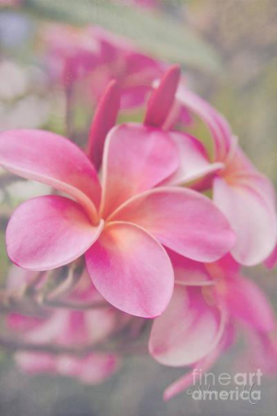 Melia Photograph - Sophrosyne - The Essence Of The Spirit by Sharon Mau