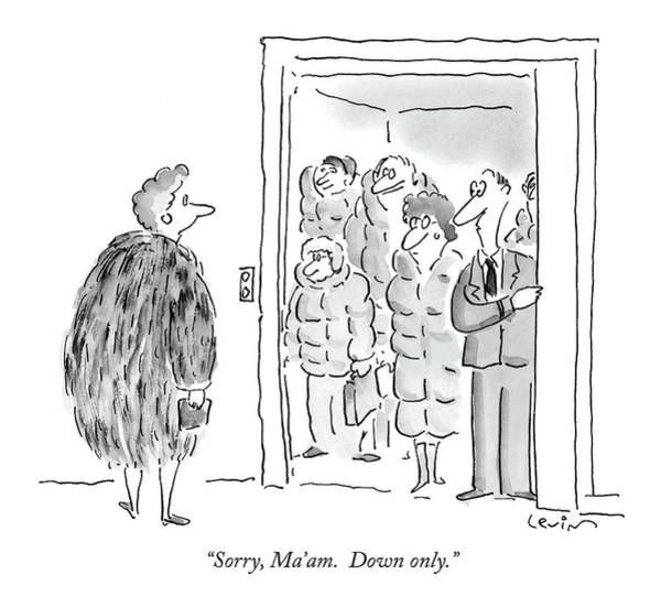 Fur Coat Drawing - Sorry, Ma'am.  Down Only by Arnie Levin